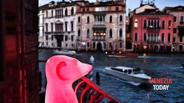 urbanimal | riapre la fondazione masieri a venezia-3